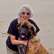 To Fellow Members of the Leonberger Club of America: My Loki is Gone